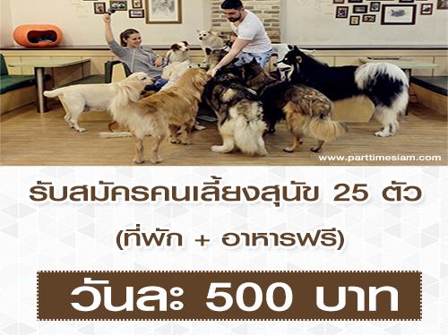 รับสมัครคนเลี้ยงสุนัข 25 ตัว (วันละ 500 บาท)