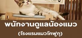 รับสมัครพนักงานดูแลน้องแมว พาเดินเล่น อัพเดทชีวิตแมว