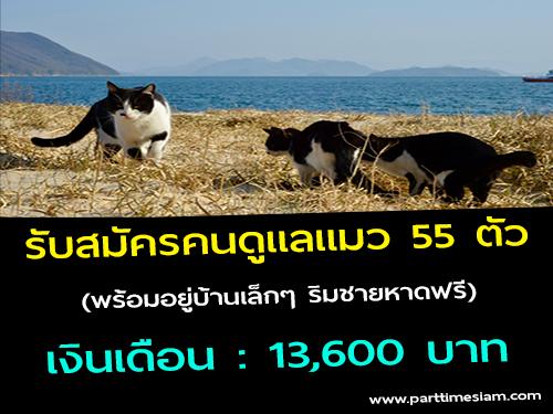 รับสมัครคนดูแลแมว 55 ตัว (พร้อมอยู่บ้านเล็กๆ ริมชายหาดฟรี)