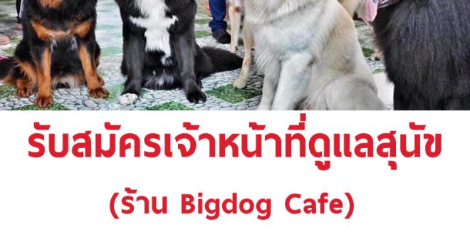 รับสมัครพนักงานดูแลสุนัขร้าน Bigdog Cafe
