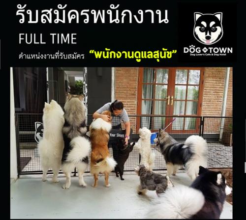 รับสมัครพนักงานดูเเลสุนัข ร้านคาเฟ่ Dog In Town Cafe Ari