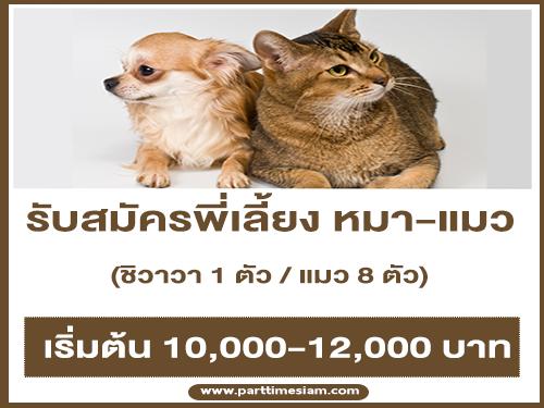 รับสมัครพี่เลี้ยง น้องหมาชิวาวา – น้องแมว 8 ตัว