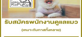 รับสมัครพนักงานดูแลน้องแมว โรงแรมแมวโคฟูกุ